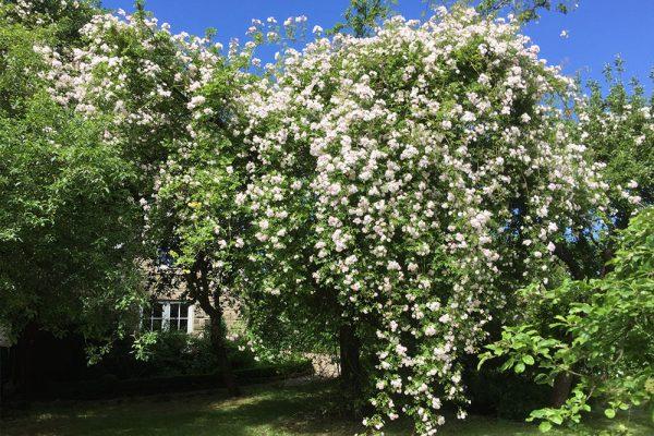 Garden-Rooms_Orchard-Garden_Roses