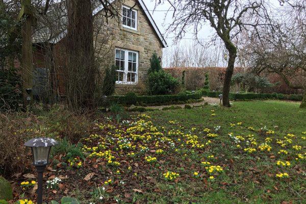 Garden-Rooms_Orchard-Garden_Winter-Flowers