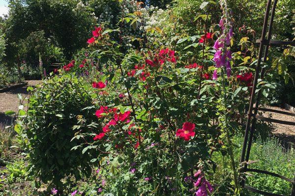 Garden-Rooms_Rose-Garden_1