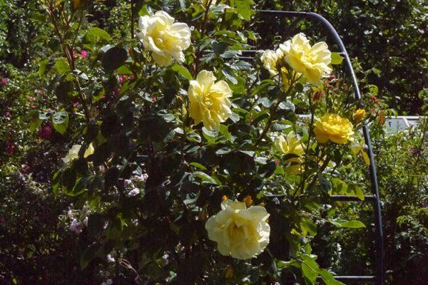 Garden-Rooms_Rose-Garden_5