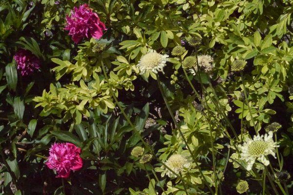 Garden-Rooms_Rose-Garden_Flowers4