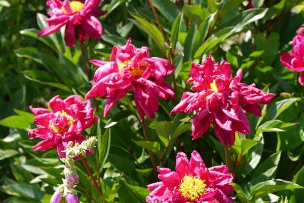 Garden-Rooms_Rose-Garden_Flowers6