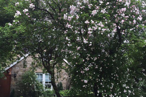 Garden-Rooms_Orchard-Garden_Roses2