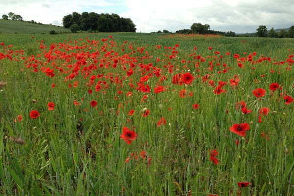 Garden-Rooms_Poppy-Fields