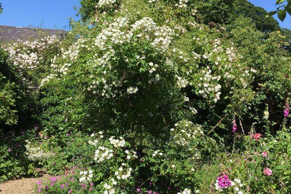 Garden-Rooms_Rose-Garden_4